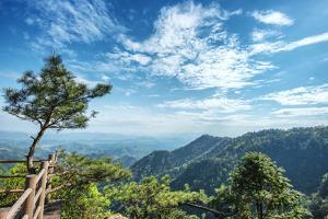 Pine Tree and Green Mountains at Tian Mu Shan Four Sides Peak, Zhejiang, China by Andreas Brandl