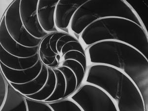 Nautilus Shell by Andreas Feininger