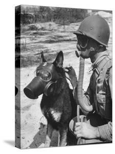 Soldier and German Shepard Wearing Gas Masks for Chemical Warfare Maneuvers by Andreas Feininger