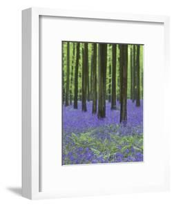 Belgium, Hallerbos, Beech Forest, Bluebells, Fern by Andreas Keil