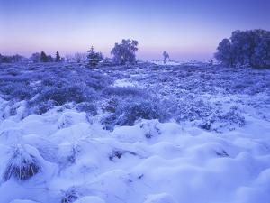 Belgium, High Fens, Hautes Fagnes, High Fens-Eifel Nature Park, Moor in Winter before Sunrise by Andreas Keil