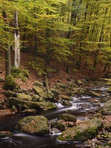 Belgium, High Fens, Hautes Fagnes, Nature Reserve High Fens-Eifel, Hoegne Gorge in Autumn by Andreas Keil
