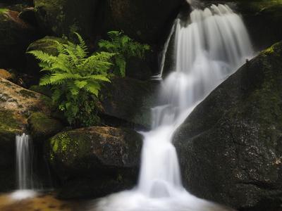 Germany, Baden-WŸrttemberg, Black Forest, Gertelsbach, Gertelsbach Waterfall, Rock with Fern