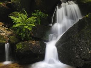 Germany, Baden-WŸrttemberg, Black Forest, Gertelsbach, Gertelsbach Waterfall, Rock with Fern by Andreas Keil