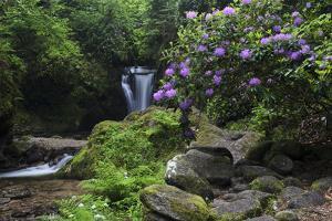 Germany, Baden-WŸrttemberg, Black Forest, Grobbach, Geroldsau Waterfall by Andreas Keil