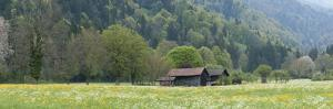 Switzerland, the Bernese Oberland, Farm House in Spring by Andreas Keil