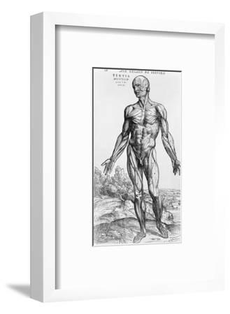 "Anatomical Study, Illustration from ""De Humani Corporis Fabrica"", 1543"