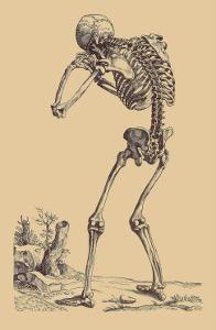 Bending Skeleton by Andreas Vesalius