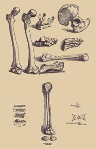 Bones with Tools by Andreas Vesalius