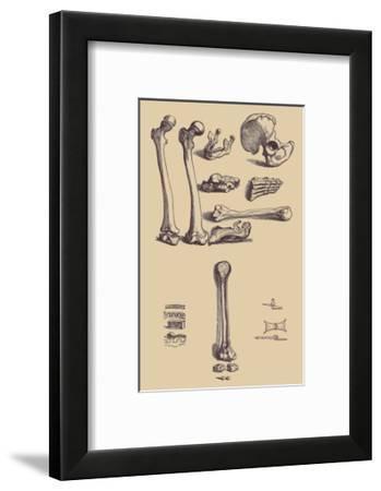 Bones with Tools