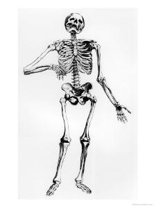 Human Skeleton by Andreas Vesalius
