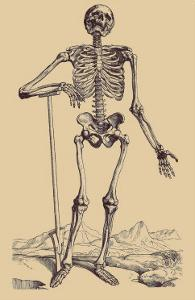 Skeleton with Shovel by Andreas Vesalius