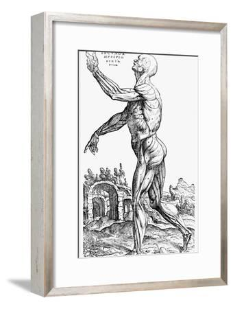 The Second Plate of the Muscles, from Book II of De Humani Corporis Fabrica, 1543