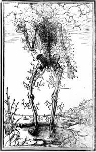 Vascular System of the Body by Andreas Vesalius