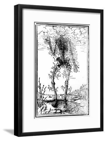 Vascular System of the Body