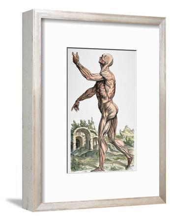 Vesalius: Muscles 02, 1543