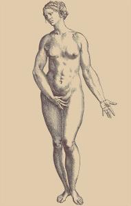 Woman by Andreas Vesalius