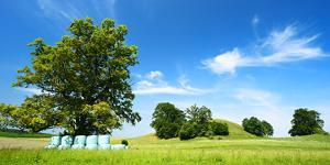Cultivated Landscape with 'SolitŠr Eiche' (Oak), Agriculturally Extensively Used Meadows, Bavaria by Andreas Vitting
