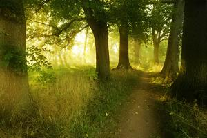 Footpath Through Avenue in the Morning Light, Flower Ground, Burgenlandkreis by Andreas Vitting