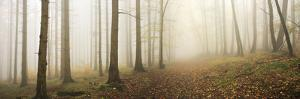Forest in autumn, dense fog, Harz, Saxony-Anhalt, Germany by Andreas Vitting