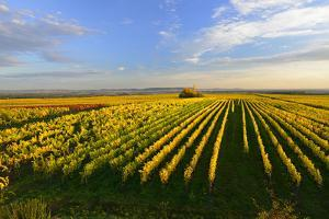 Germany, Bavaria, Franconia, North Home, Vineyards in the Cross Mountain by Andreas Vitting
