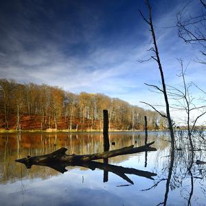 Germany, Mecklenburg-Western Pomerania, MŸritz National Park by Andreas Vitting