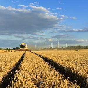Germany, Saxony-Anhalt, Saalekreis (District), Combine Harvester, Harvest by Andreas Vitting