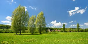 Spring in the Unstruttal, Poplars on Meadow with Dandelion, Near Freyburg by Andreas Vitting