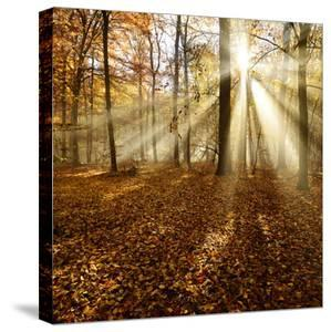 Sunrays and Morning Fog, Deciduous Forest in Autumn, Ziegelroda Forest, Saxony-Anhalt, Germany by Andreas Vitting