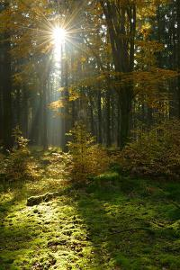 Sunrays and Morning Fog, Mixed Forest in Autumn, Harz, Near Allrode, Saxony-Anhalt, Germany by Andreas Vitting