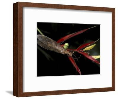 Heliconia and Stone Fly, Machu Picchu, Peru