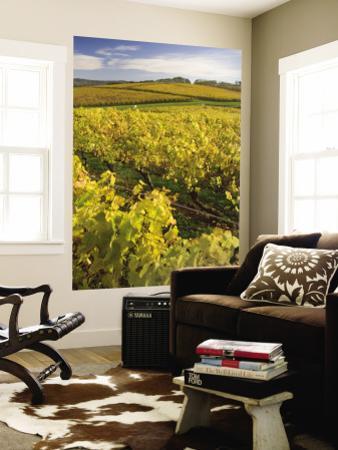 Autumn in the Tamar Valley Vineyards