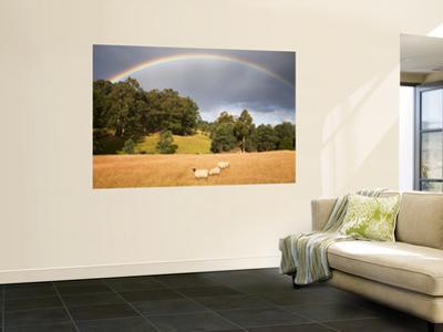 Sheep Grazing under Rainbow