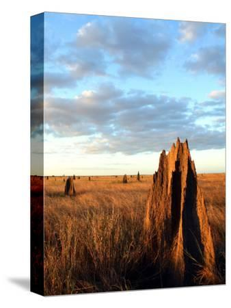 Termite Mounds on the Nifold Plain