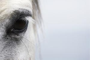 High-Key close up of a Welsh Section A Pony by Andrew Bret Wallis