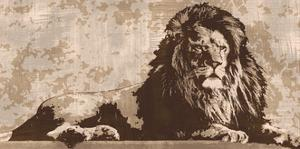 Lion by Andrew Cooper