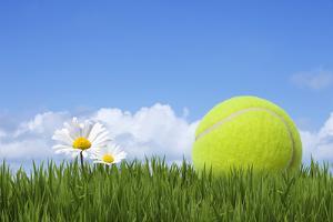 Tennis Ball by Andrew Dernie
