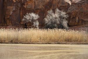 Desert Flora by Andrew Geiger