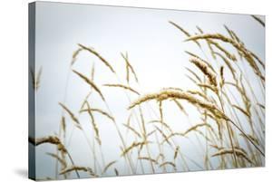 Summer Harvest by Andrew Geiger