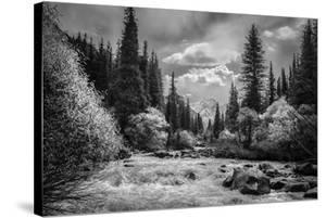 Wild Waterway by Andrew Geiger