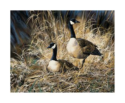 Lifetime Mate- Geese