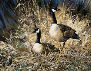 Lifetime Mate- Geese by Andrew Kiss