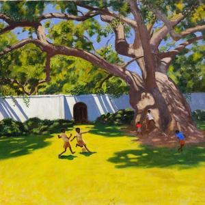 Ancient Campor Tree, Vergelegen Estate, South Africa by Andrew Macara