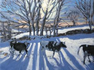 Friesian Cows, 2009 by Andrew Macara