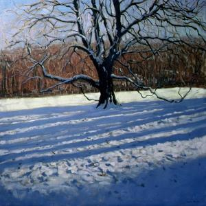 Large Tree, Snow, Calke Abbey by Andrew Macara