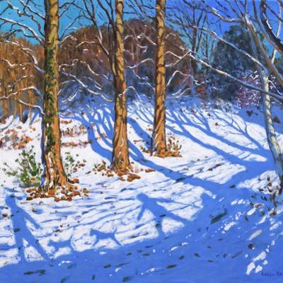 November Snow, Allestree Park, Derby, 2017 by Andrew Macara