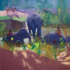 Washing Elephants, Sri Lanka, 1995 by Andrew Macara