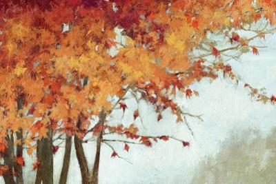 Fall Canopy I by Andrew Michaels