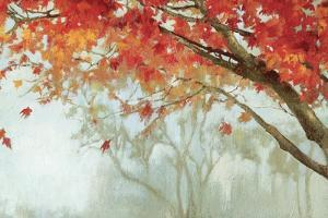 Fall Canopy II by Andrew Michaels