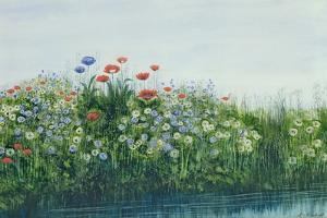 Poppies by a Stream by Andrew Nicholl